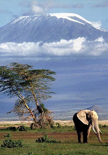 Kilimanjaro LFC
